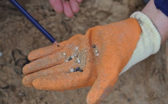 Microplastics can spread through flying insects, research shows
