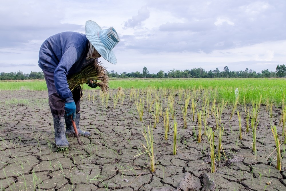 Natural disasters in Asia caused $48 billion worth of agricultural losses in 2017