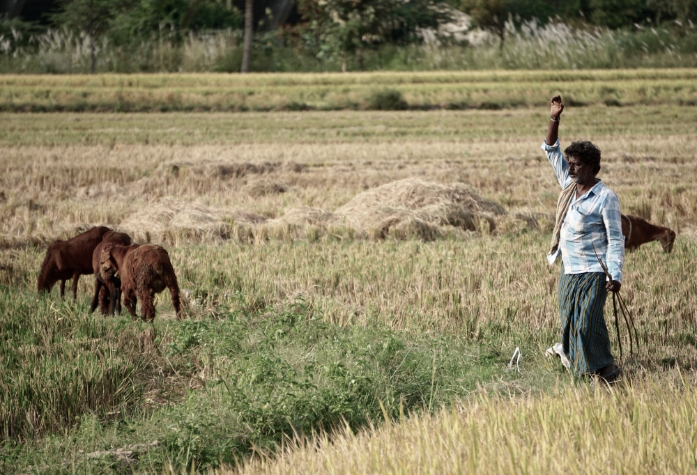 Climate change could hit farming incomes in India by 25%