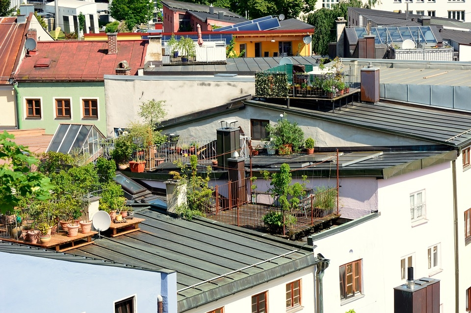 Urban farms have huge untapped potential to fight hunger